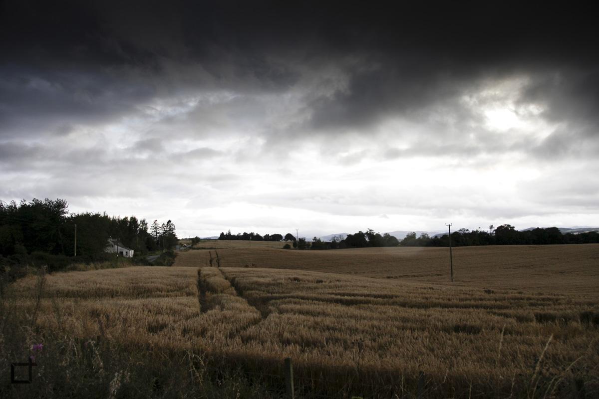 Scozia_Grano