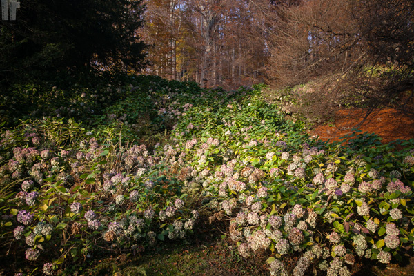 Parco Burcina Rododendri