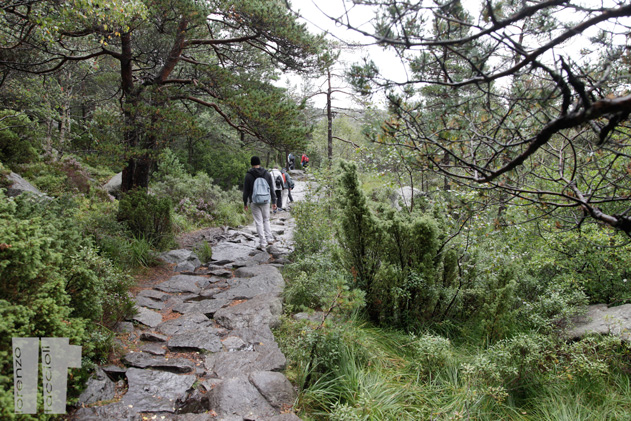 Sentiero Preikestolhytta Vandrerhjem