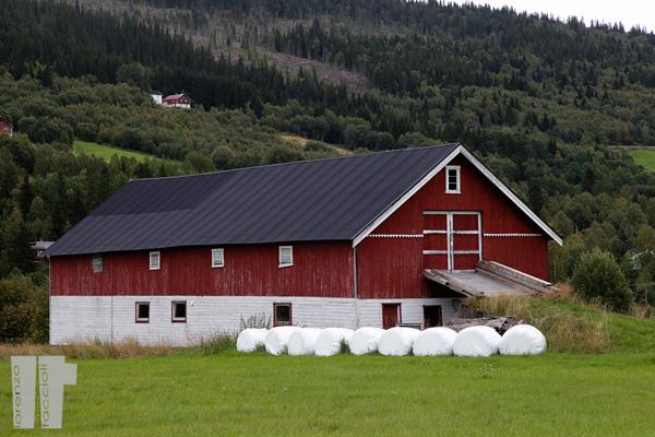 Fattoria Norvegia