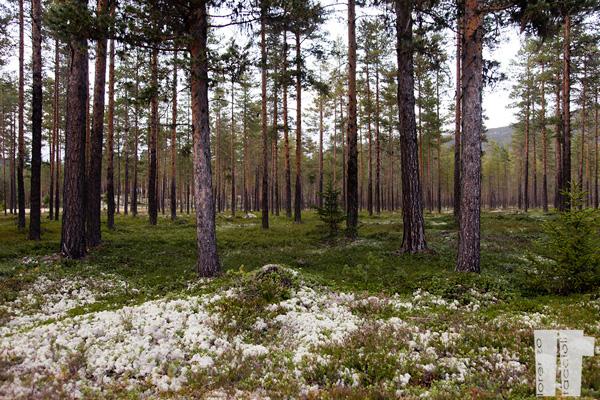 Foresta Norvegia