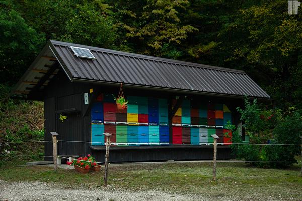 Slovenia_Apicoltura