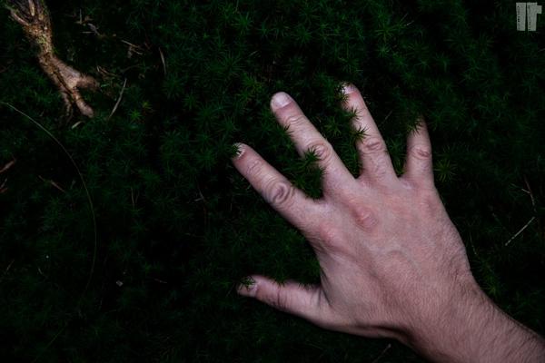 Soffici Arbusti