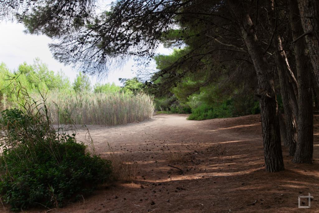 Pineta Punta della Suina