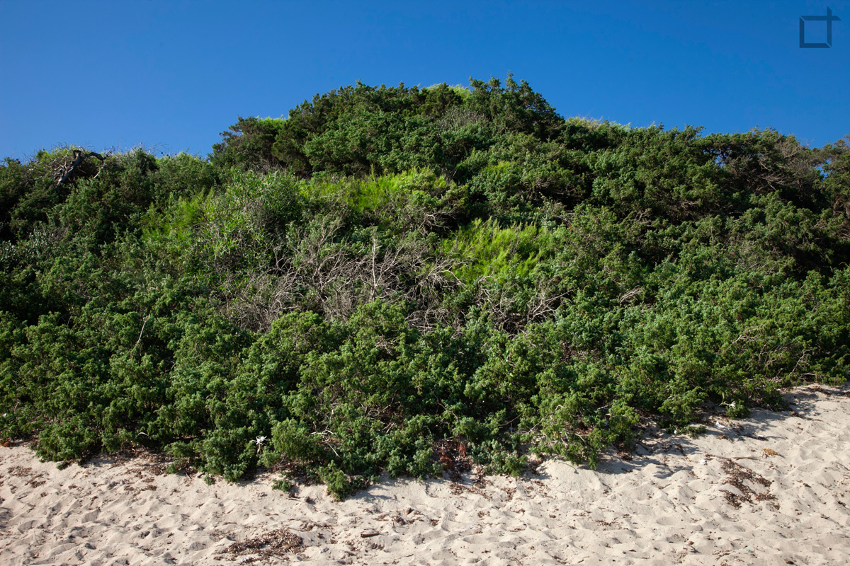 Punta Prosciutto Vegetazione