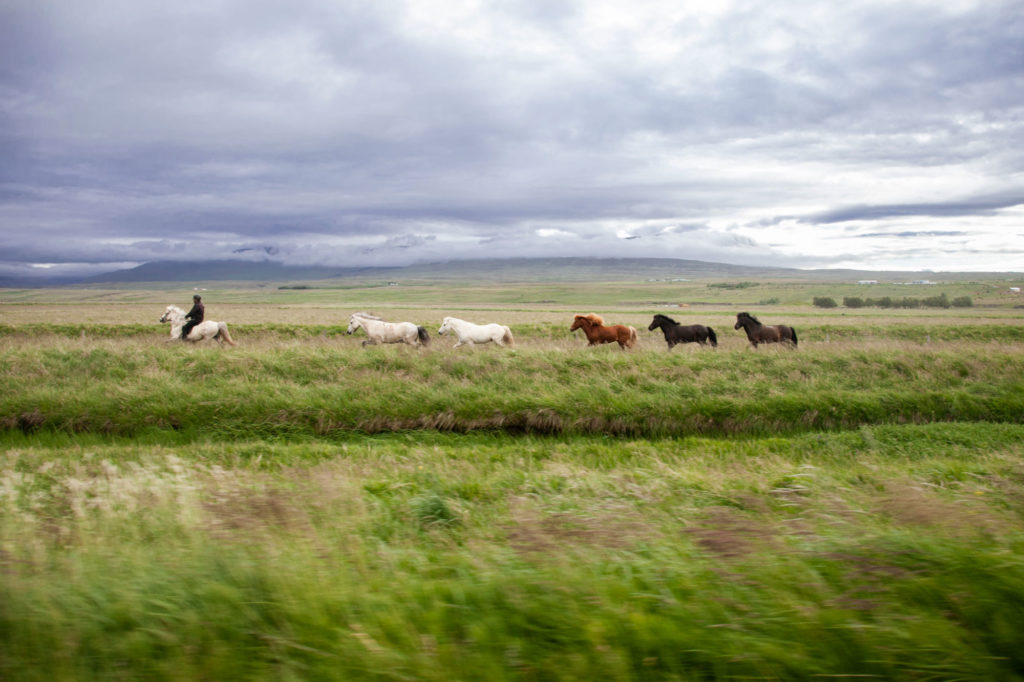 Islanda Cavalli
