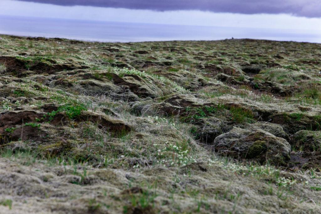 Lava e Licheni
