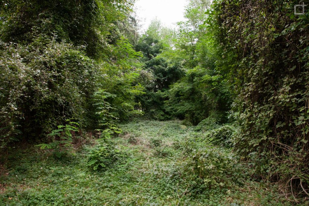 area naturale selbagnone forlimpopoli