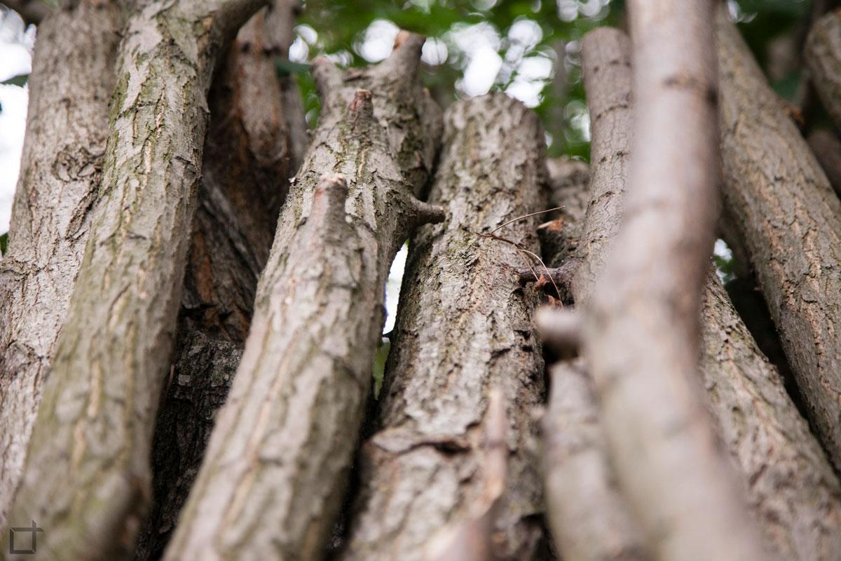 legna di tronchi