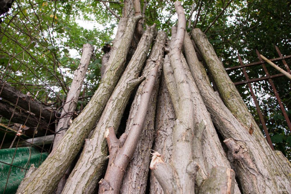tronchi ammassati