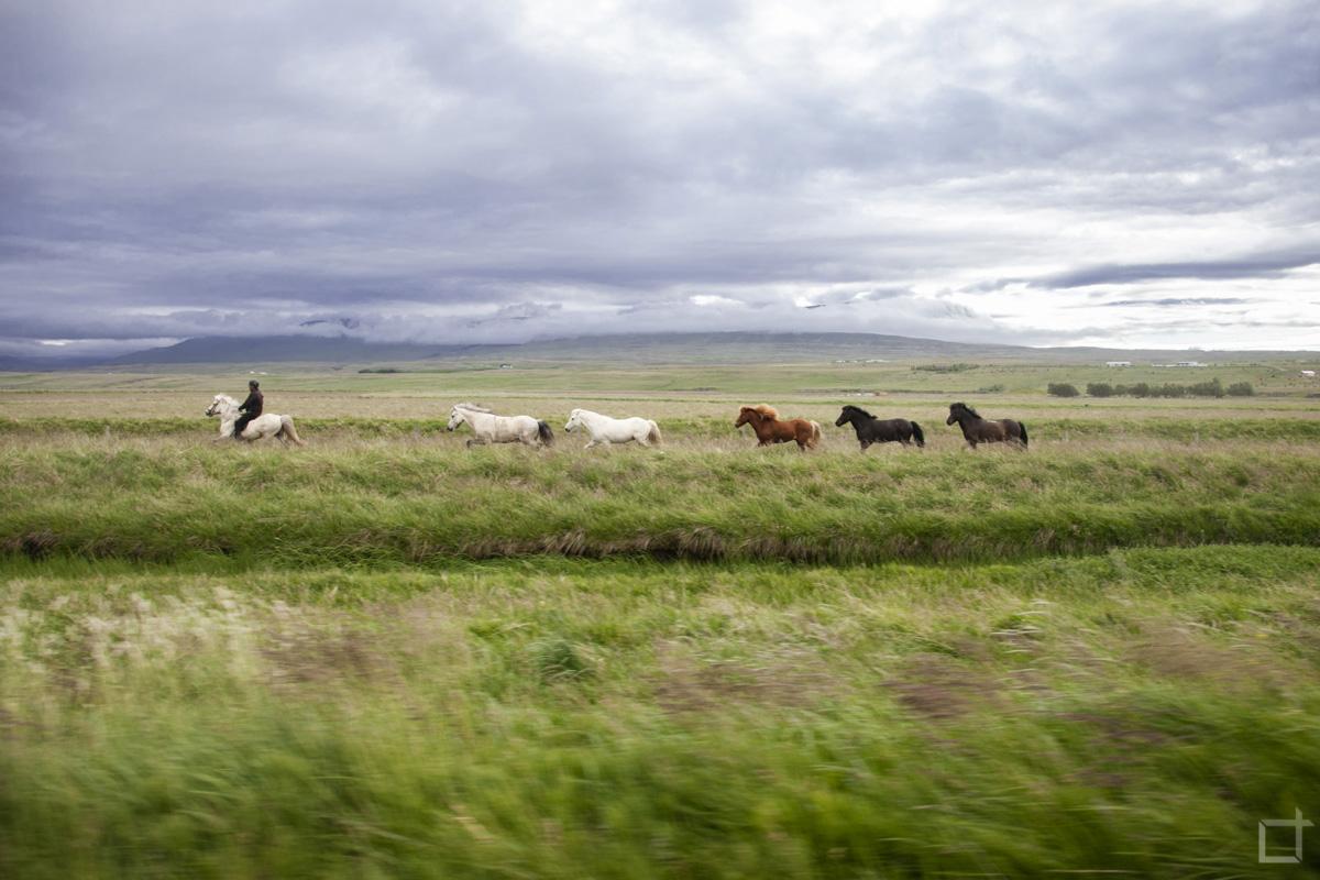 Cavalli e natura selvaggia
