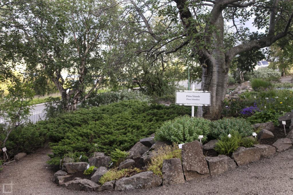 flora-islandese