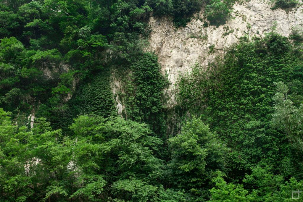 vegetazione-e-roccia
