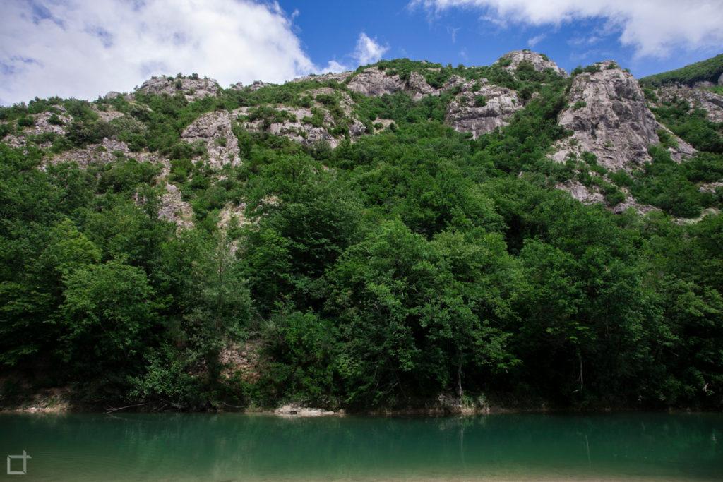 vegetazione-sul-fiume