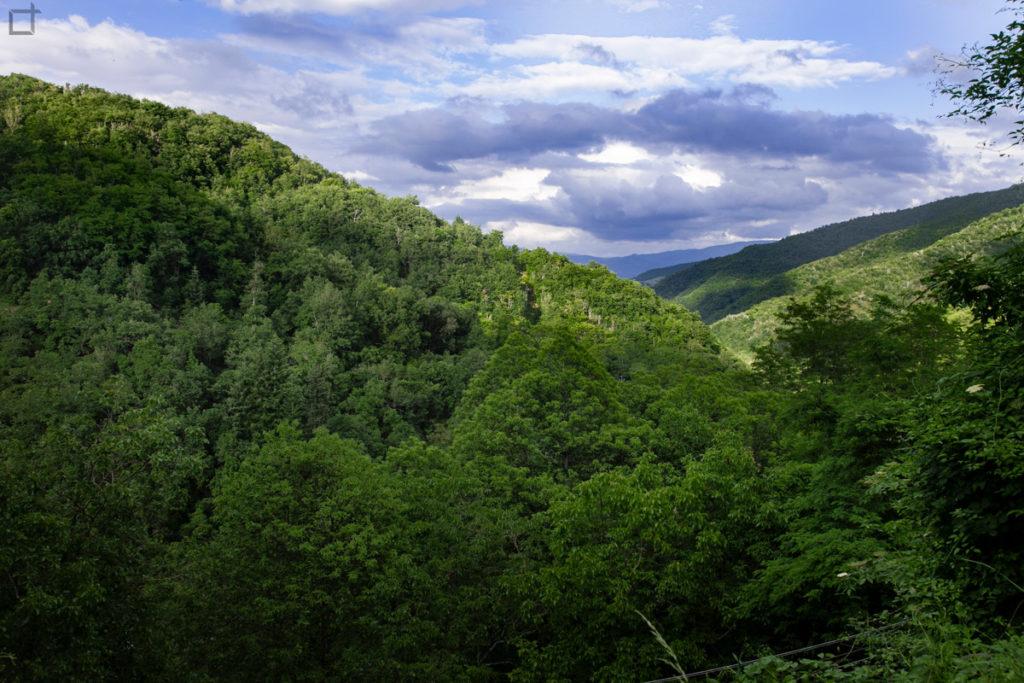 verdi-colline-del-casentino