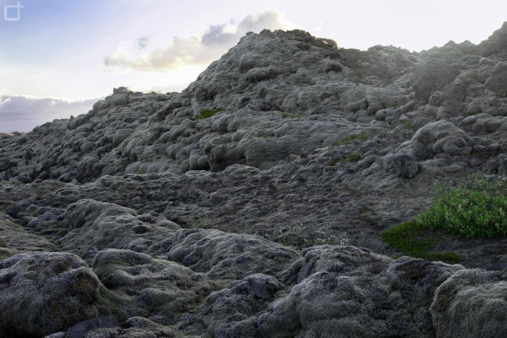 Campo di Lava Muschio e Licheni in Islanda