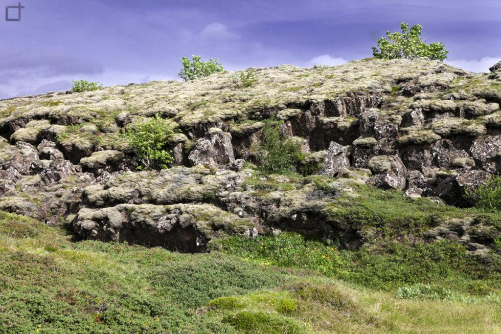 Lava e Muschio Islanda