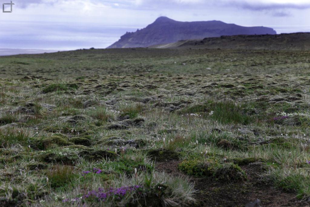 Lava e Muschio sui monti islandesi