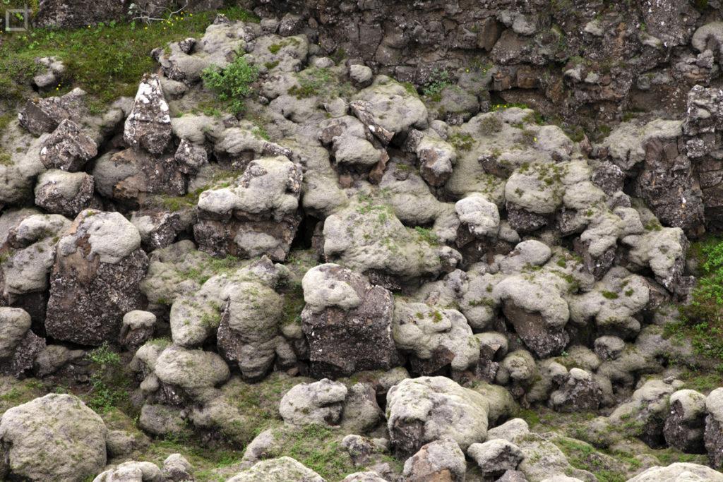 Particolare di Muschio e Licheni su Lava Islanda
