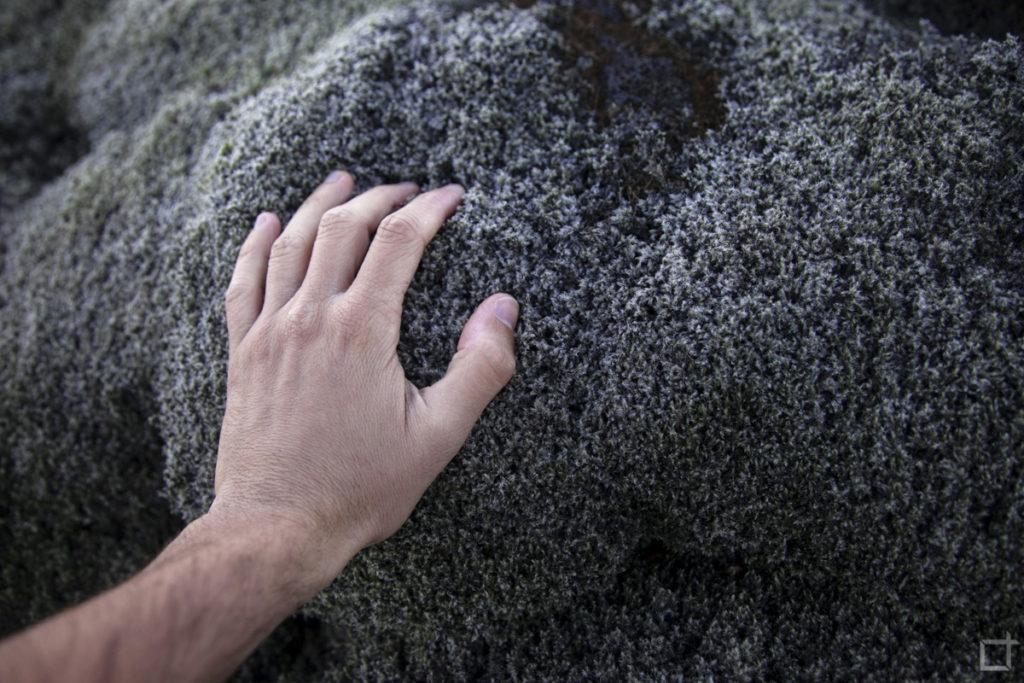 Toccare il Muschio Islandese