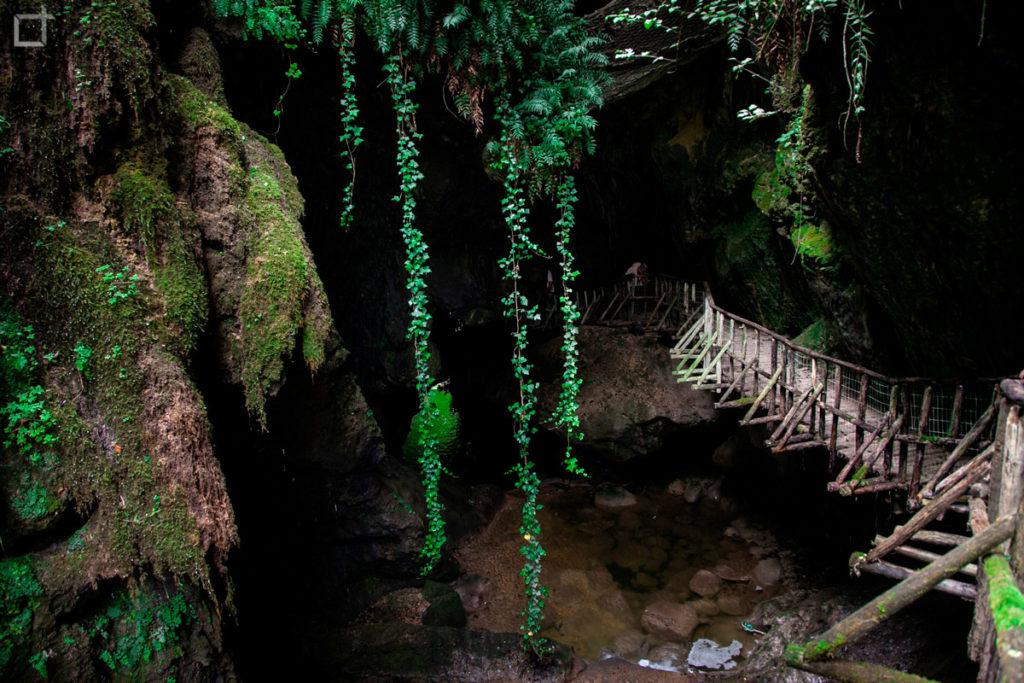 Pianta Rampicante e Passerella Sospesa Grotte del Caglieron