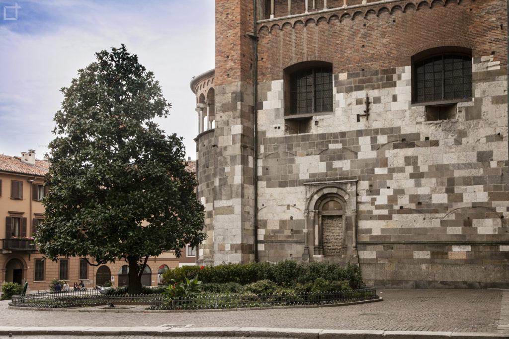 Particolare della Cattedrale di Cremona e albero