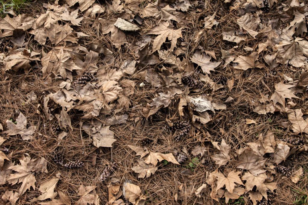 Foglie a terra - autunno