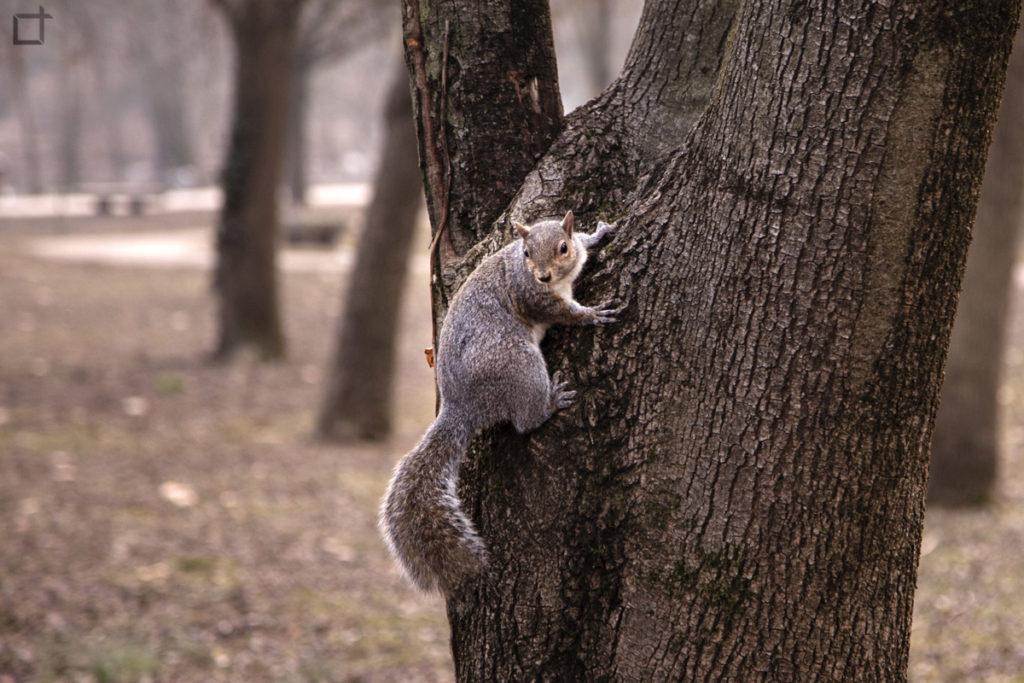 Scoiattolo su di un albero