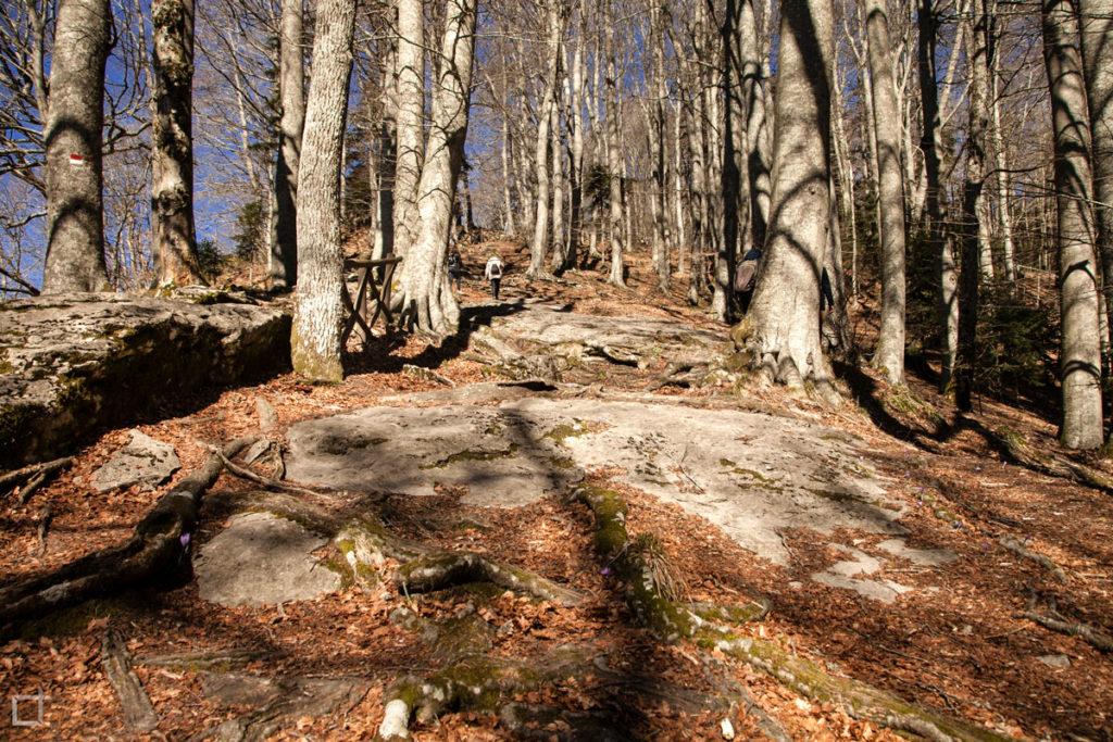 Alberi di Inverno nelle foreste casentinesi