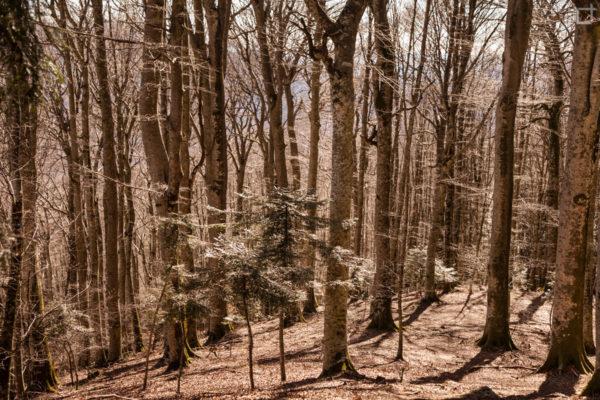 Alberi nelle Foreste Casentinesi