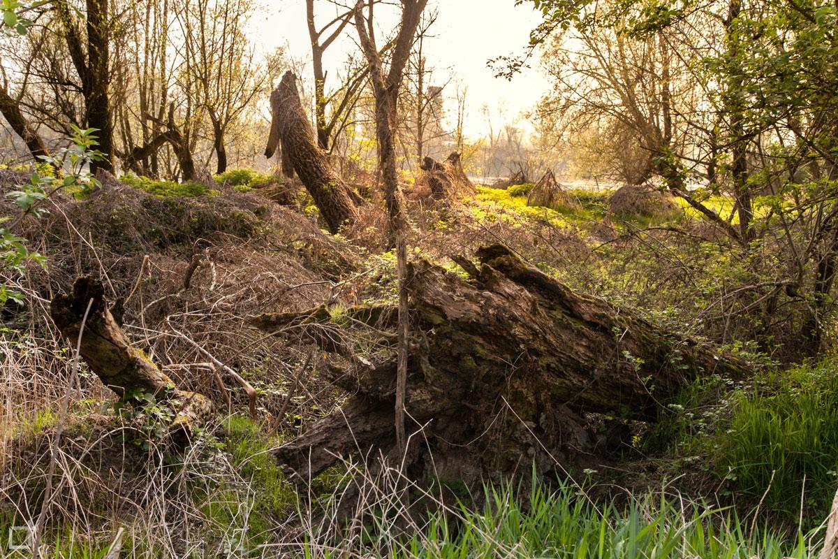 Parco Naturale di Lodi