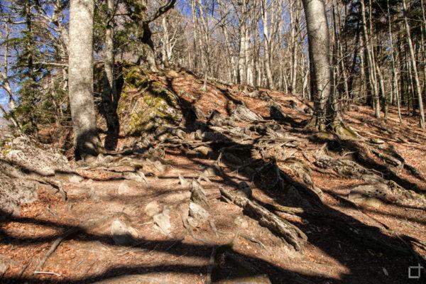 Radici nel trekking di La Verna