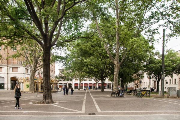 Alberi in Piazza Giacomo Matteotti Modena