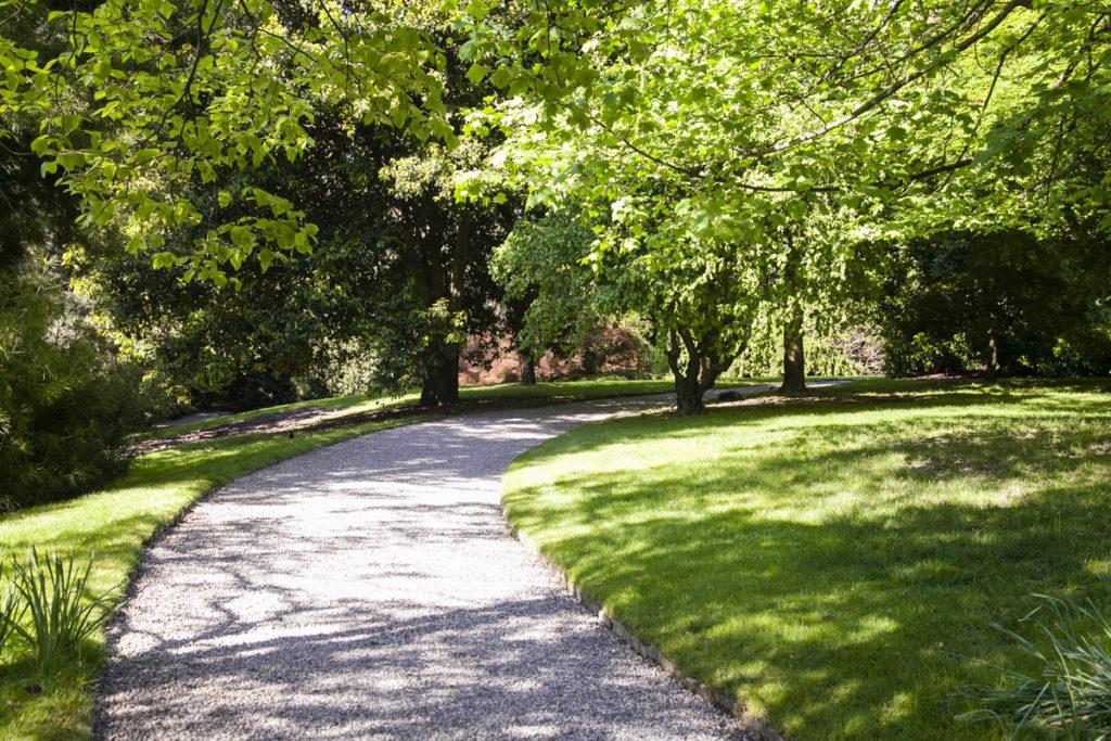 Sentiero in mezzo al parco