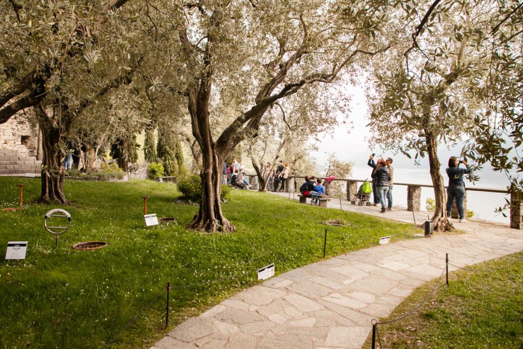Giardini di Castel di Vezio con Olivi