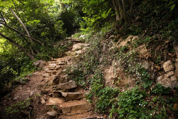 Sentiero in salita per il Castello - Lago di Como