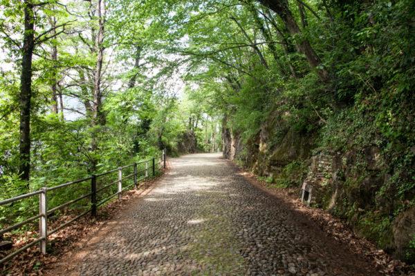 Sentiero nella Natura del Lago di Como