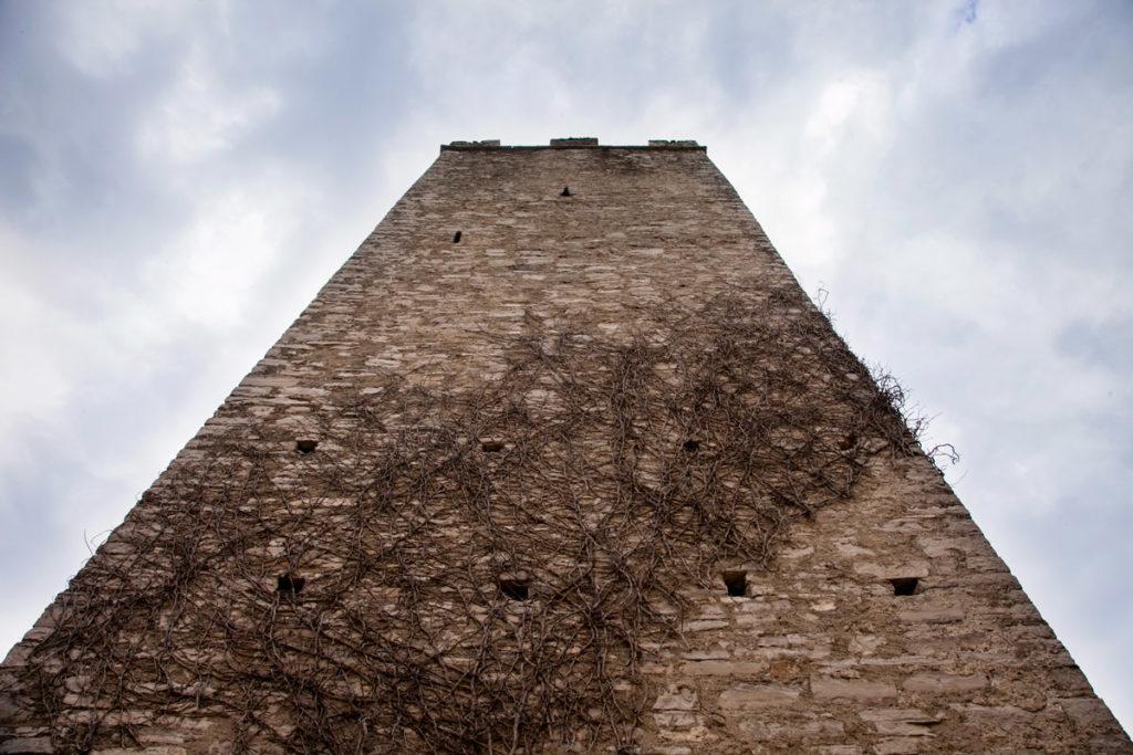 Torre e edera secca a Castello di Vezio