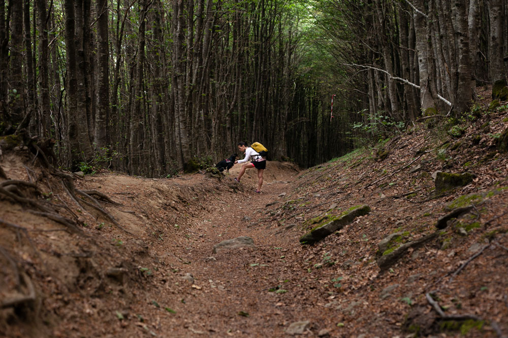 Addestramento Cani - Sentiero Autunnale Foresta