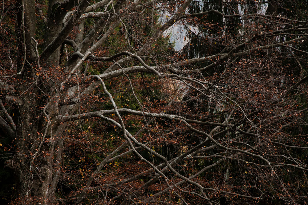 Alberi di Autunno - Foglie e Colori Chiari
