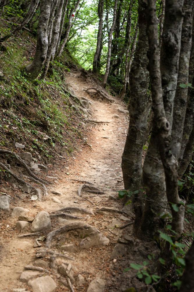 Alberi e Sentiero - Monte Falco e Monte Falterona