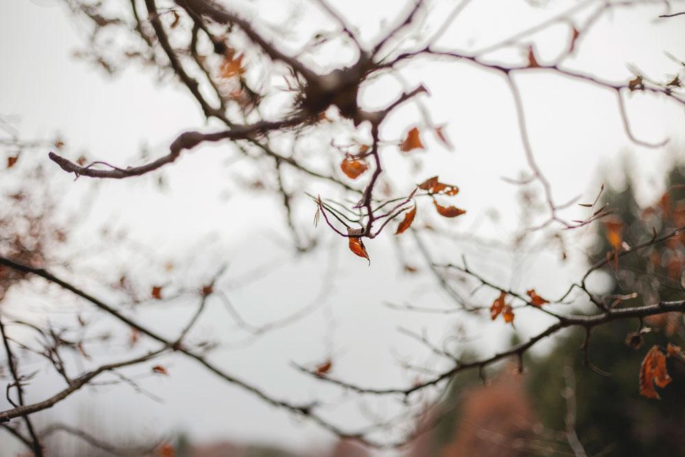 Autunno e le sue foglie - Rami Spogli