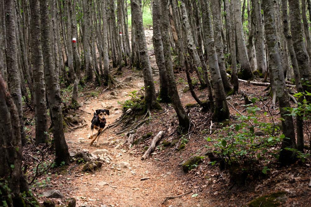 Cane che Corre nella Foresta