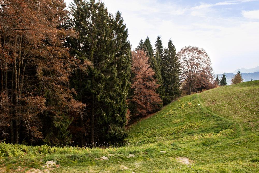 Cattedrale Vegetale Bergamo - Come Arrivare