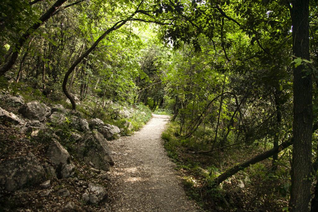 Foresta percorso Busatte Tempesta