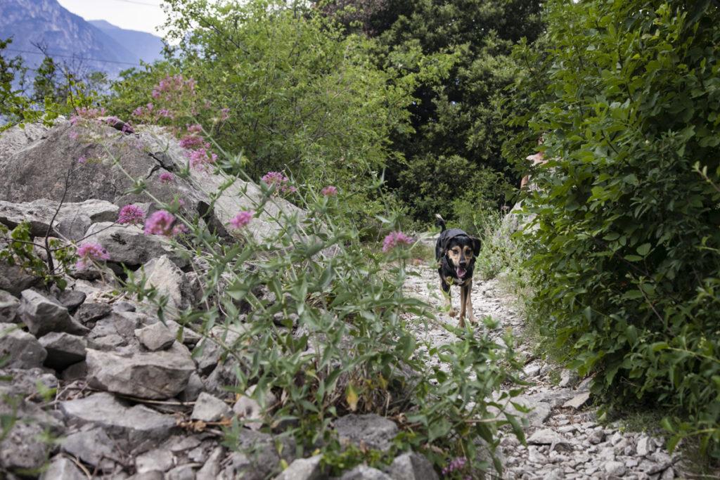 Grover nel Trekking Trentino