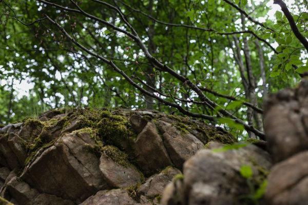 Roccia e Vegetazione - Foresta Casentino