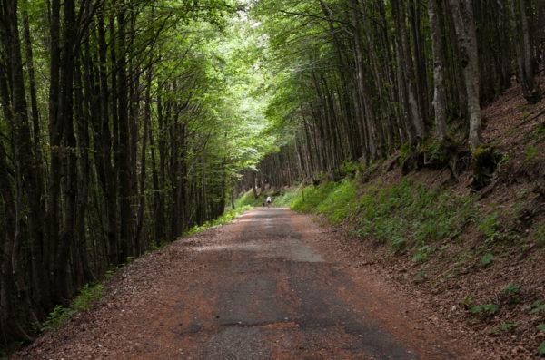 Sentiero nelle foreste Casentinesi