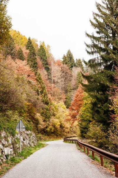 Strada Autunnale - Alberi Colorati