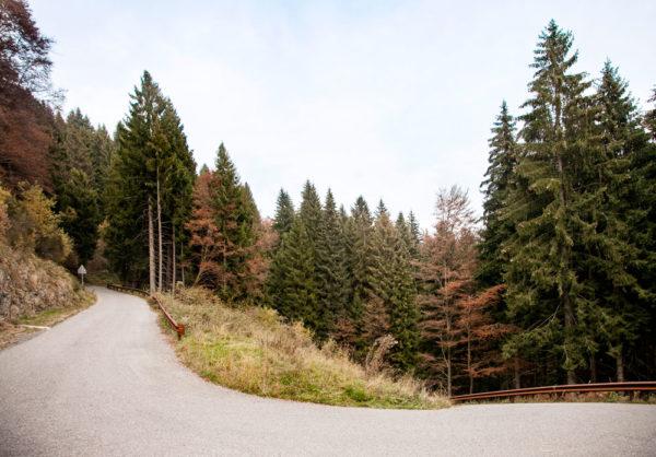 Strada di Plassa - Come Arrivare alla Cattedrale Vegetale di Oltre il Colle